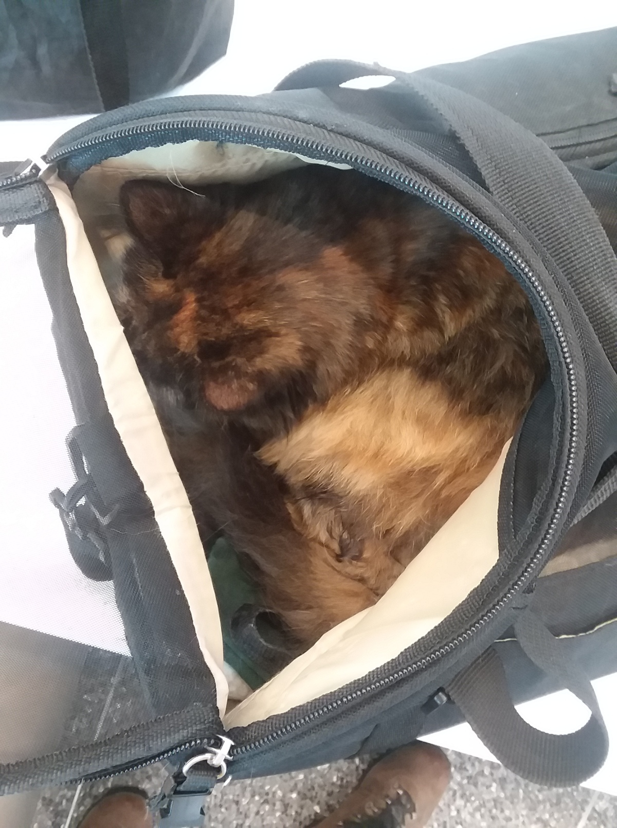 Ten Things I've Learned from Flying with Cats